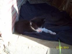Izo, chat Gouttière