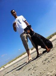 Isis, chien Dobermann
