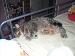 Isisse, chat