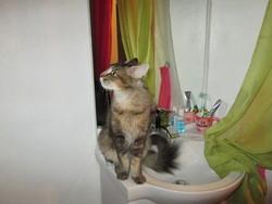 Ispahan, chat Gouttière