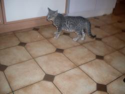 Ithaque, chat Gouttière