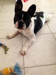 Ithos, chien