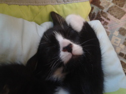 Iveco, chat Gouttière