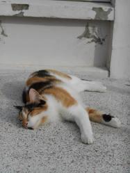 Ivy, chat Gouttière