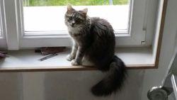 Izia, chat Gouttière