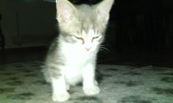 Izia, chat