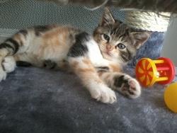 Izie, chat Gouttière