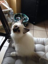 Izie, chat