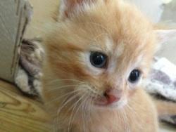 Izio, chat Gouttière