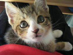 Izy, chat Gouttière