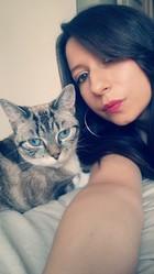 Izzie, chat Siamois