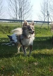 Izzy, chien