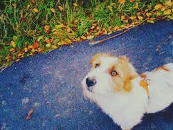 Jacen, chien Jack Russell Terrier