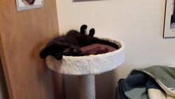 Jack, chat Gouttière