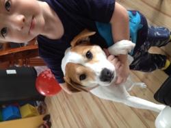 Jackie, chien Jack Russell Terrier