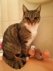 Jackie, chat Gouttière