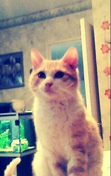 Jackson, chat Gouttière