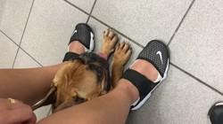 Jackson, chien Bouledogue français