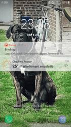 Jackson, chien Cane Corso