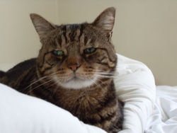 Jacob, chat Gouttière