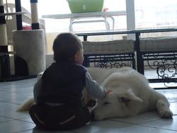 Jade, chien Berger blanc suisse