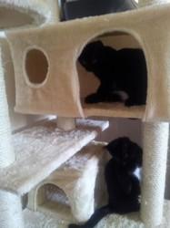 Jade, chat Gouttière