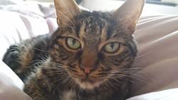 Jagger, chat Gouttière