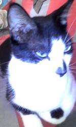 Jago, chat Gouttière