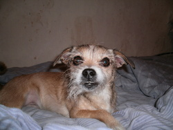 Jahna, chien