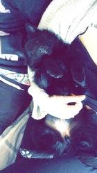 Jalna, chien Schipperke