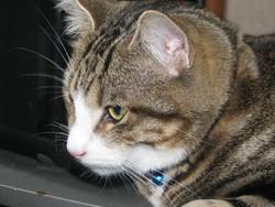 Jacque, chat