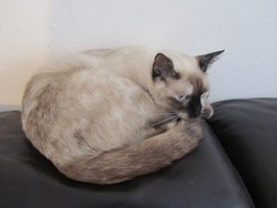 Jama Ma Disparue Volée, chat