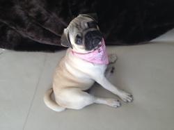 Jana, chien Carlin
