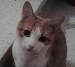 Jana, chat Gouttière