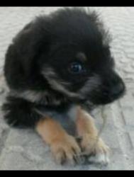 Jango, chien