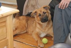 Janis, chien