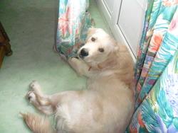 Janko, chien