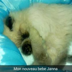 Janna, chat