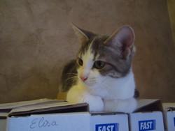 Janvier, chat Gouttière