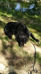 Jasko, chien