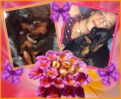 Jasmine, chien Pinscher