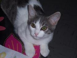 Jasmine, chat Gouttière