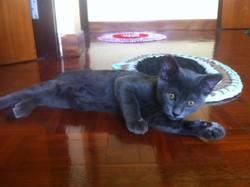 Jason, chat Gouttière