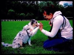 Jazz, chien Berger australien