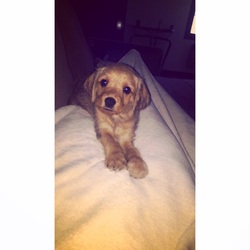 Jazzy , chien