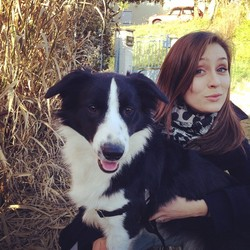 Jazzy, chien Border Collie