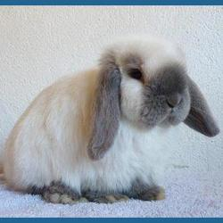 Jazzy, rongeur Lapin