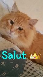 Jean-Philibert Dit Alessandro, chat Angora turc