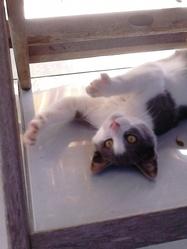 Jeepsie, chat Gouttière