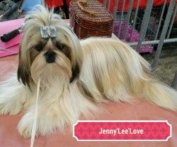 Jenny'Lee'Love Du Lac De Cupidon, chien Shih Tzu